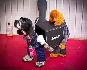dogs life matchmaker logistics