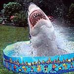 Surprise Shark Attack